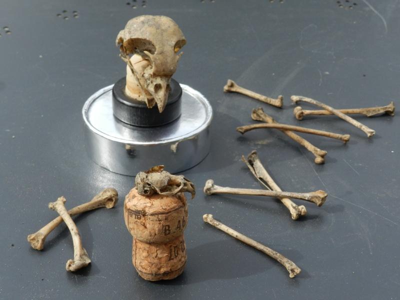 Squelettes à gogo Vauvyr23