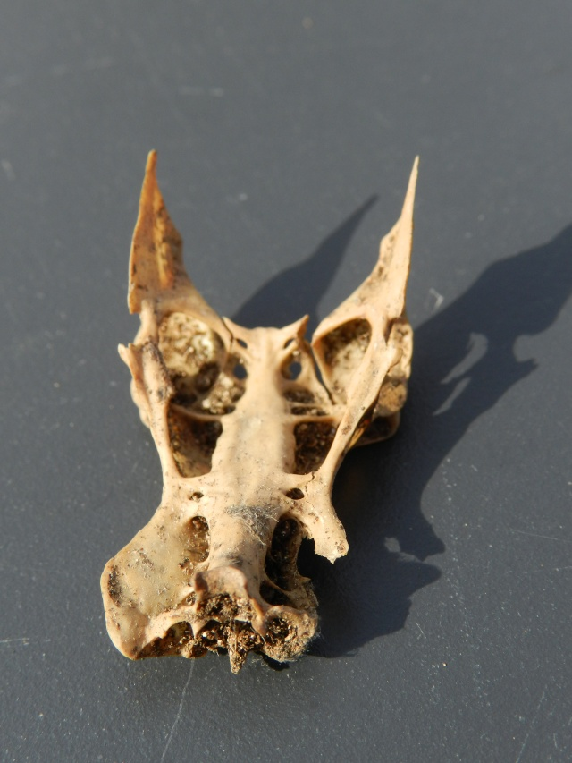 Squelettes à gogo Vauvyr25