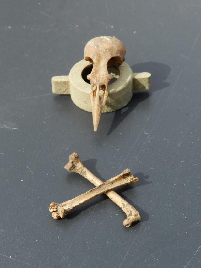 Squelettes à gogo Vauvyr26