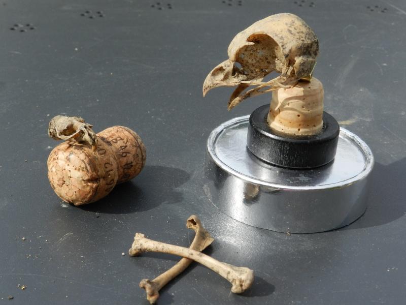 Squelettes à gogo Vauvyr27