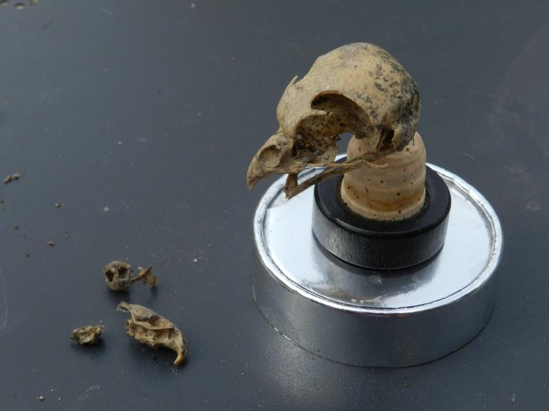 Squelettes à gogo Vauvyr28