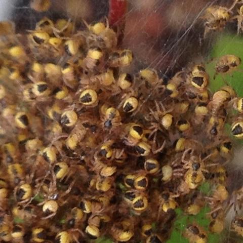 Spider Nursery? Img_0111