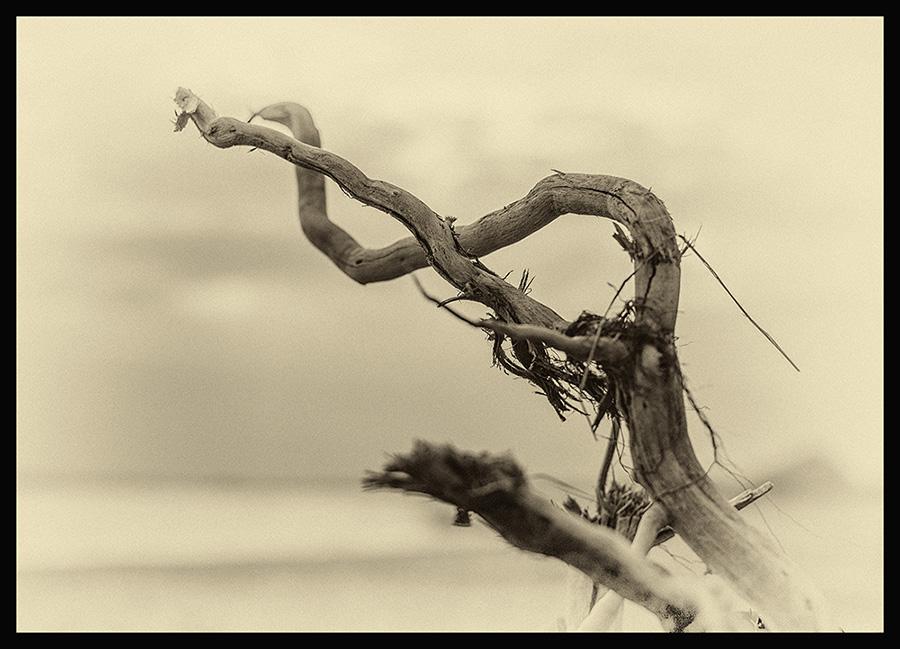 Sculptures Img_7112
