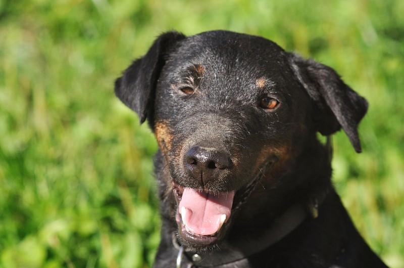 Re: DINO, x jagd terrier 11 ans -  Spa de la Region Creusotine à Marmagne (71)   Dino610