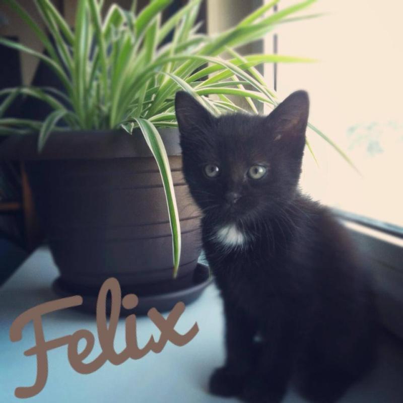 Felix  10001610