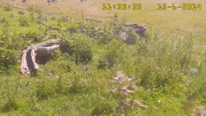 Fox Cam in the Netherlands - Page 2 Goose10