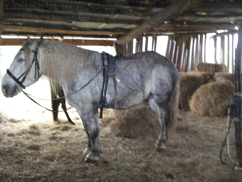 cheval qui tousse...foin bof...va devoir trouver un autre fournisseur de foin.... Dscf9617