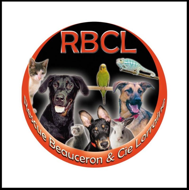 Rescue Beauceron & Cie Lorraine (Dit RBCL) 94624710