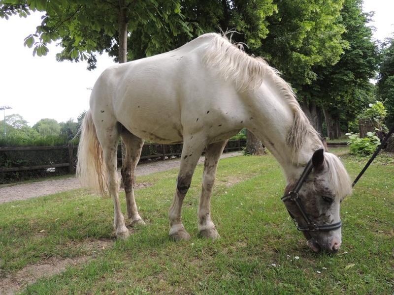 TECHNO - ONC poney née en 1997 - placée hors association Techno10