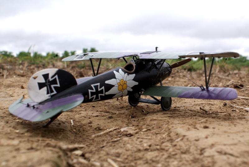 "Albatros D.V ""Edelweiss"" du Lt. Otto Kissenberth, Jasta 16b, juin 1917. 00611"