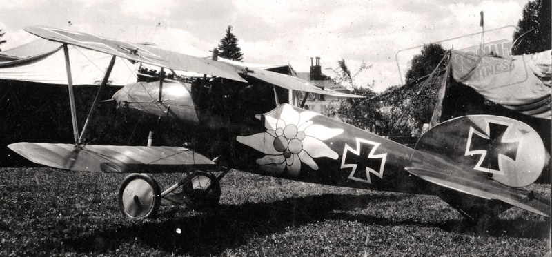 "Albatros D.V ""Edelweiss"" du Lt. Otto Kissenberth, Jasta 16b, juin 1917. Albatr15"