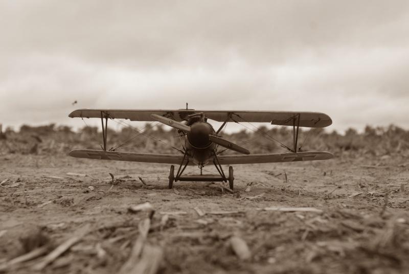 "Albatros D.V ""Edelweiss"" du Lt. Otto Kissenberth, Jasta 16b, juin 1917. Dsc03318"