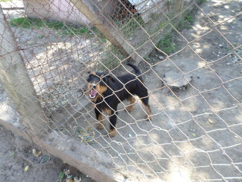 ZLOYA, M-Type Jagterrier, né 2009, 10 kg, aveugle (BELLA) - En FA chez Corinne91(départ91) Sam_1040