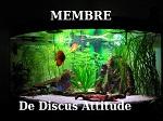 Discus Attitude Img_2111