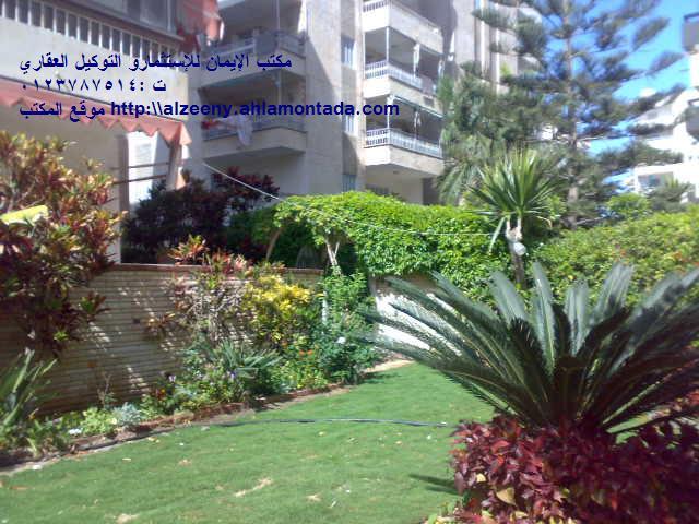 شقة ارضي ( فيلا ) بحديقة كبيرة جدااا للإيجار مفروش مكيفة ثلاثة غرف وصالة لوكس المجموعة التاسعة - المعمورة الشاطيء  Uuuuuu33