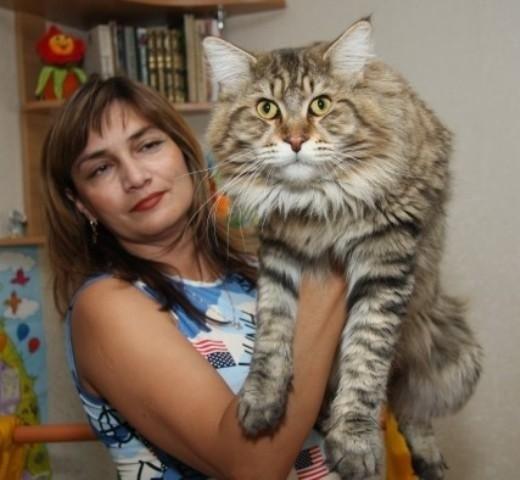 mon nouveau chat Huge-m10