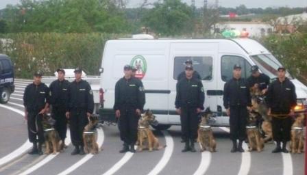 تعريف شامل بوحدة الكلاب البوليسية بالأمن الوطني 13056310