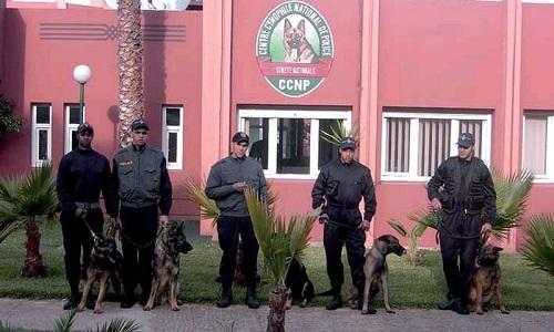 تعريف شامل بوحدة الكلاب البوليسية بالأمن الوطني Press10