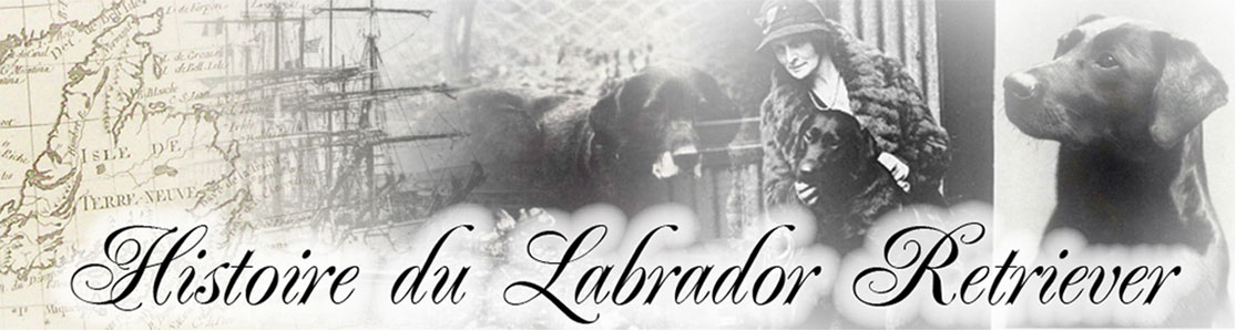 Forum de l'Histoire du Labrador Retriever