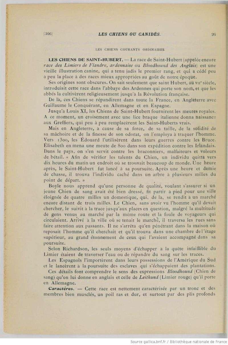 Définition du Chien de Saint-Hubert en 1903... Def410