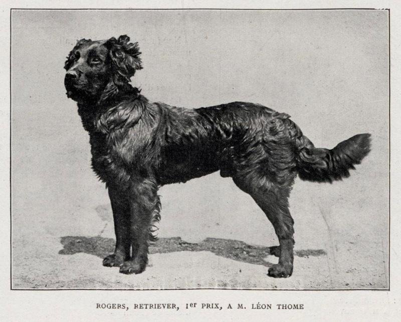 Rogers, mâle Retriever à M. Léon Thome, 1e prix à l'exposition de Paris en 1906... Expo_114