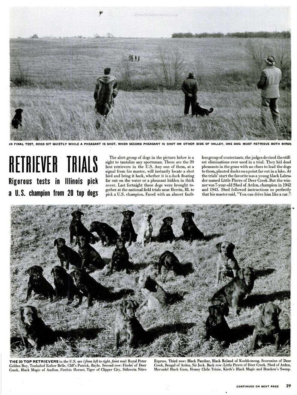 Retriever Trials... Life-110