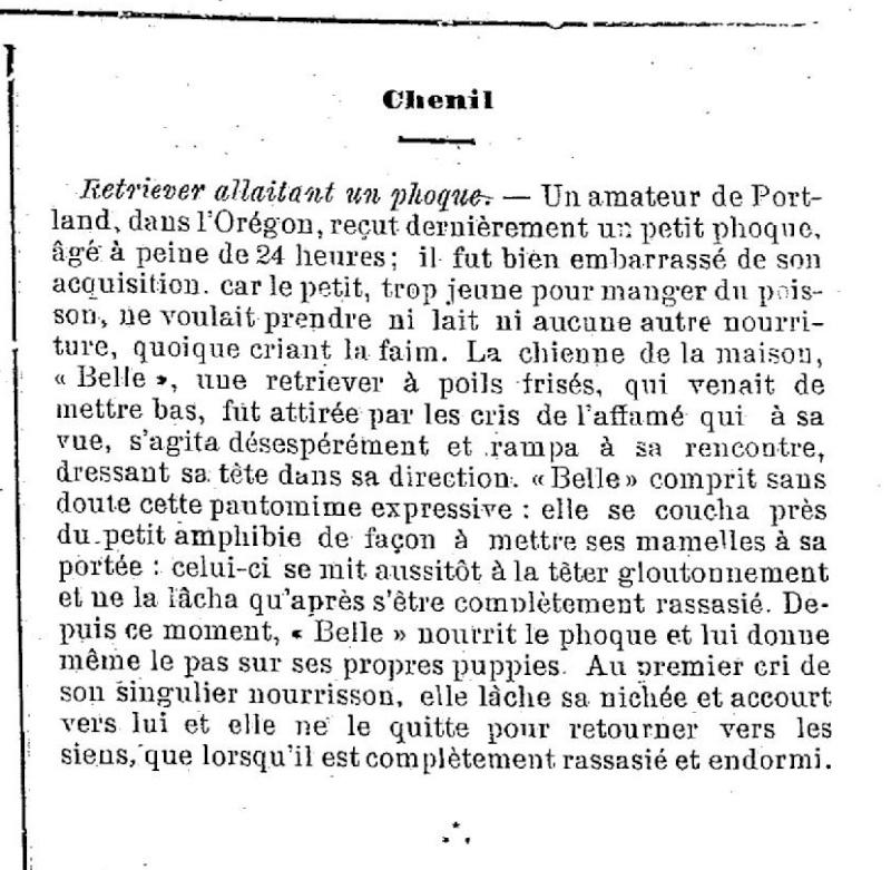 Retriever et phoque... Phoque10