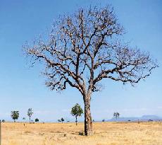 [Temë Islame] Njeriu që vetëm për vete punon është si dru që pemë nuk lëshon! Pema10