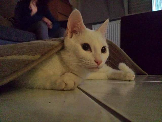 Images de chats. ._. 14629210