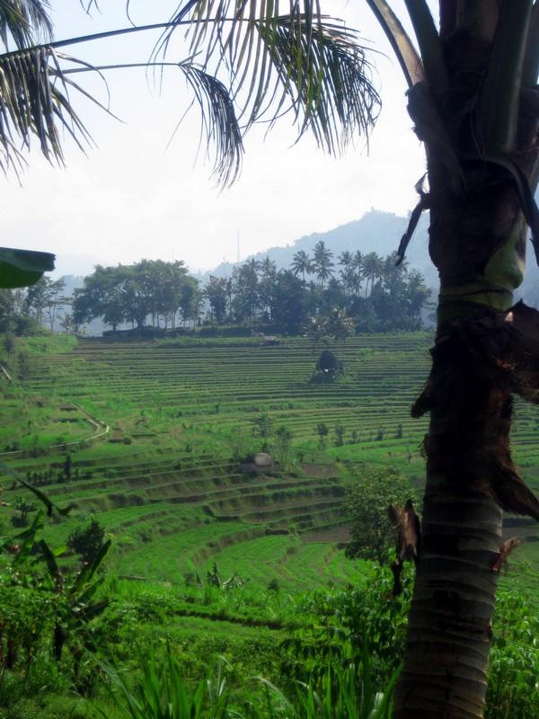 La photo du dimanche (2) Bali_s10