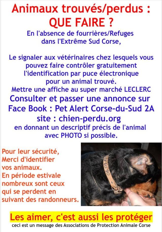affiche pour chien trouvé ou perdu Flyers10