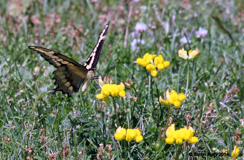 Grand porte-queue (papillon) Img_0711