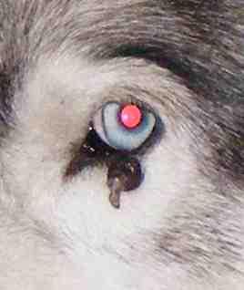 Saskia a été opérée d'une verrue sur une paupière Truc1m10