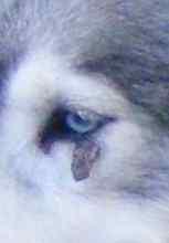 Saskia a été opérée d'une verrue sur une paupière Truc_010