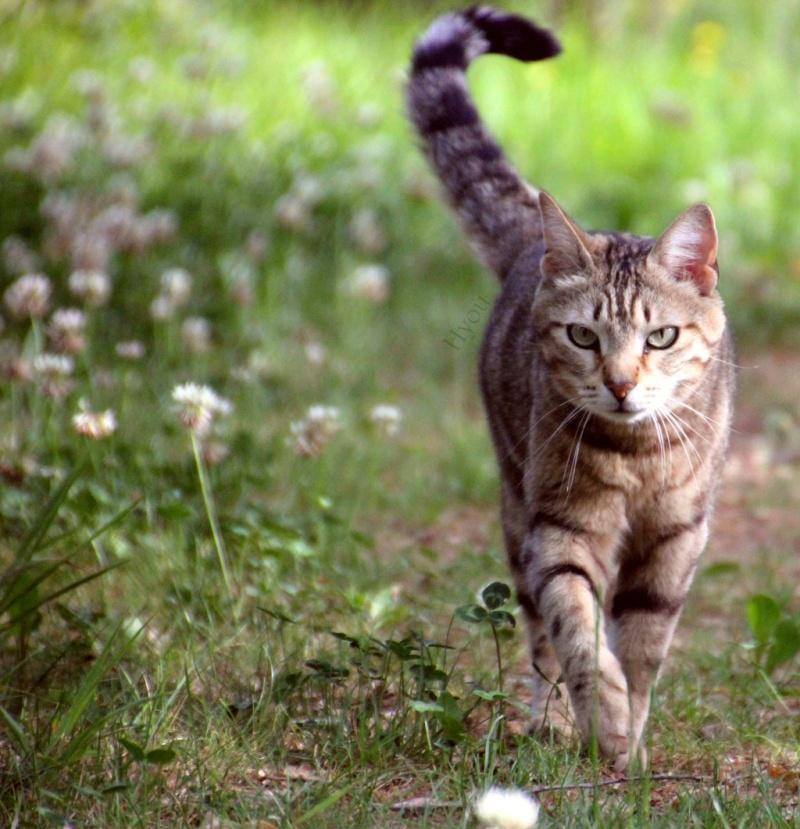 Résultats du concours de photo du mois de juin sur la nature.  Cat_by10