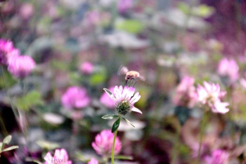Résultats du concours de photo du mois de juin sur la nature.  Insect10
