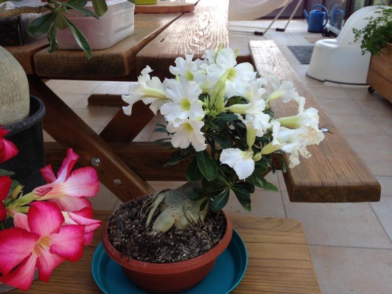 Un petit aperçu de mes plantes. Img_3211