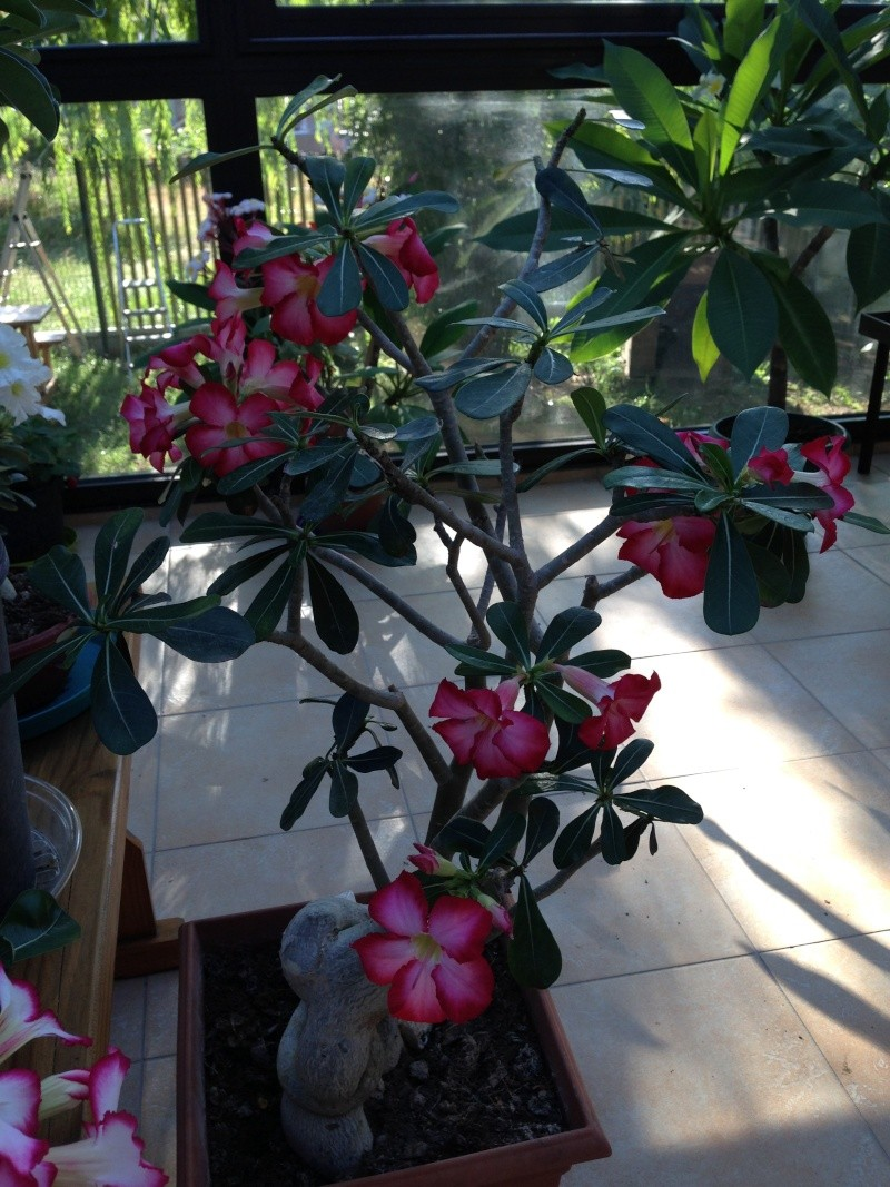 Un petit aperçu de mes plantes. Img_3212