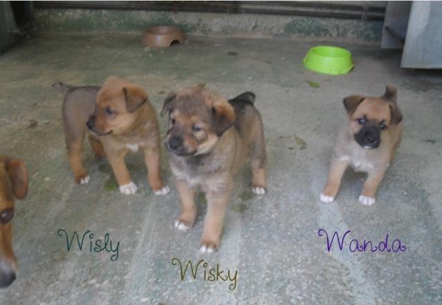 WISKY   feras moins de 10 kgs  Wisky10