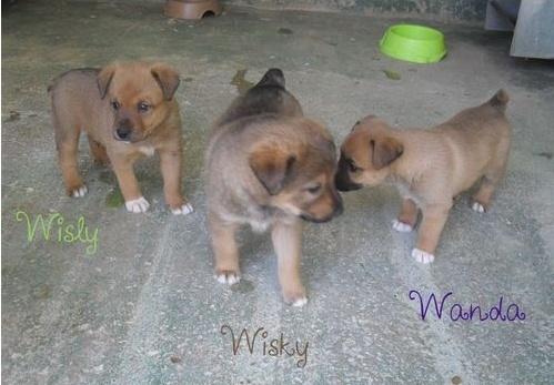 WISKY   feras moins de 10 kgs  Wisky_11