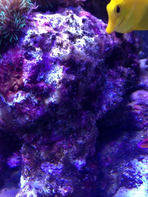 cyano Image111