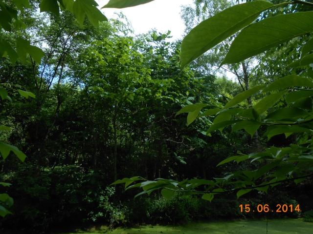 Arborétum Le Chêne vert  Arbora13