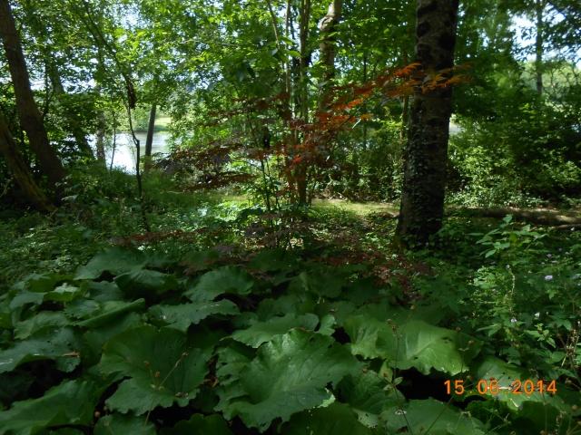 Arborétum Le Chêne vert  Arbora14