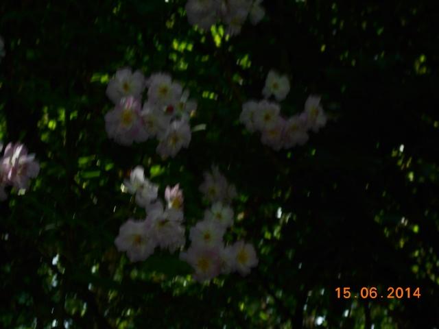 Arborétum Le Chêne vert  Arbora19