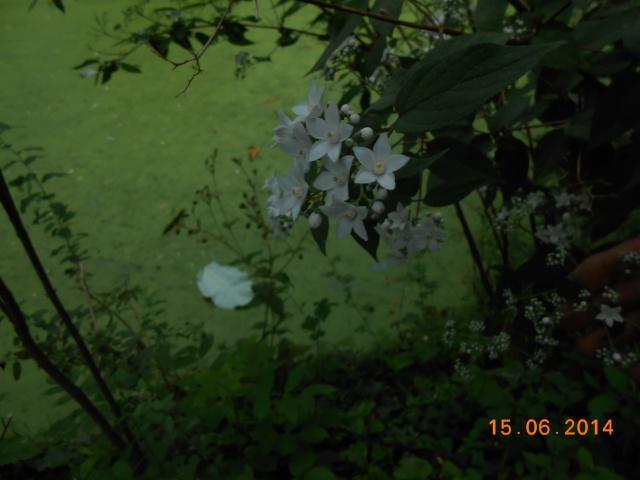 Arborétum Le Chêne vert  Arbora20