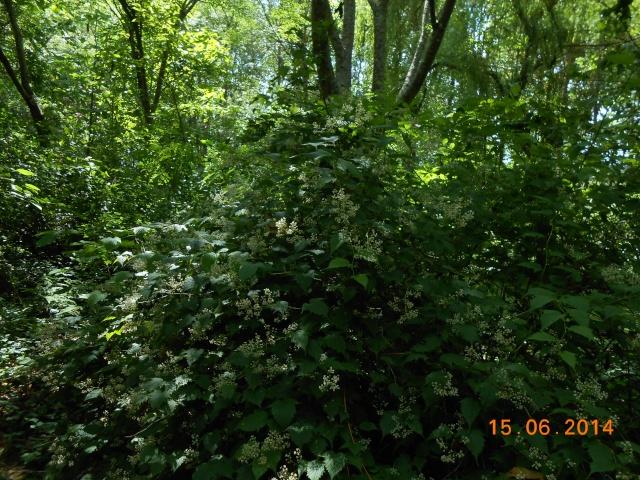 Arborétum Le Chêne vert  Arbora23