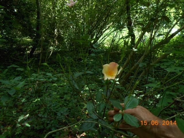 Arborétum Le Chêne vert  Arbora24
