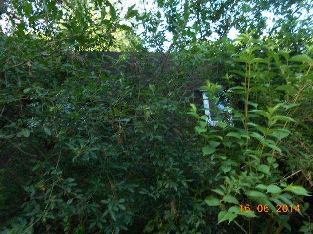 Arborétum Le Chêne vert  Arbora27