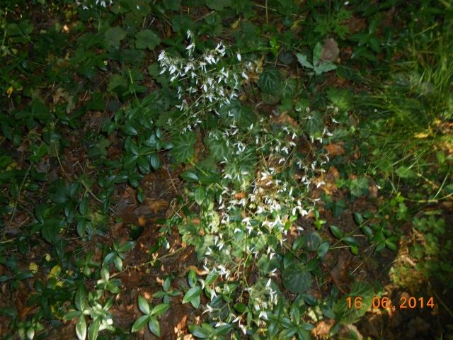 Arborétum Le Chêne vert  Arbora31