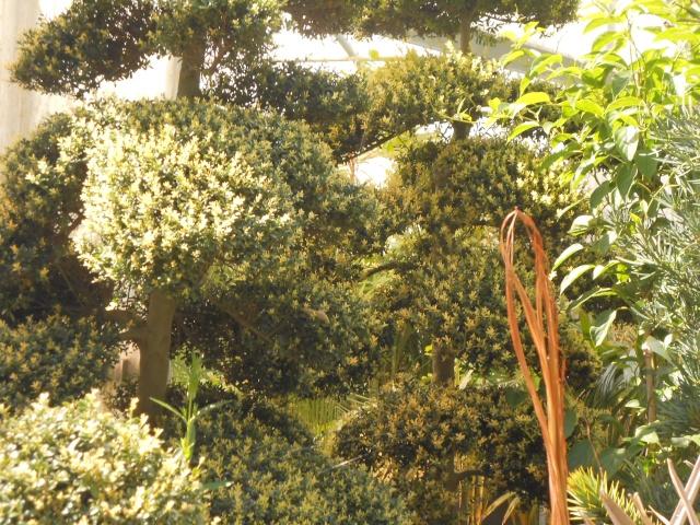 Parc aux camélias - Page 3 Breta282